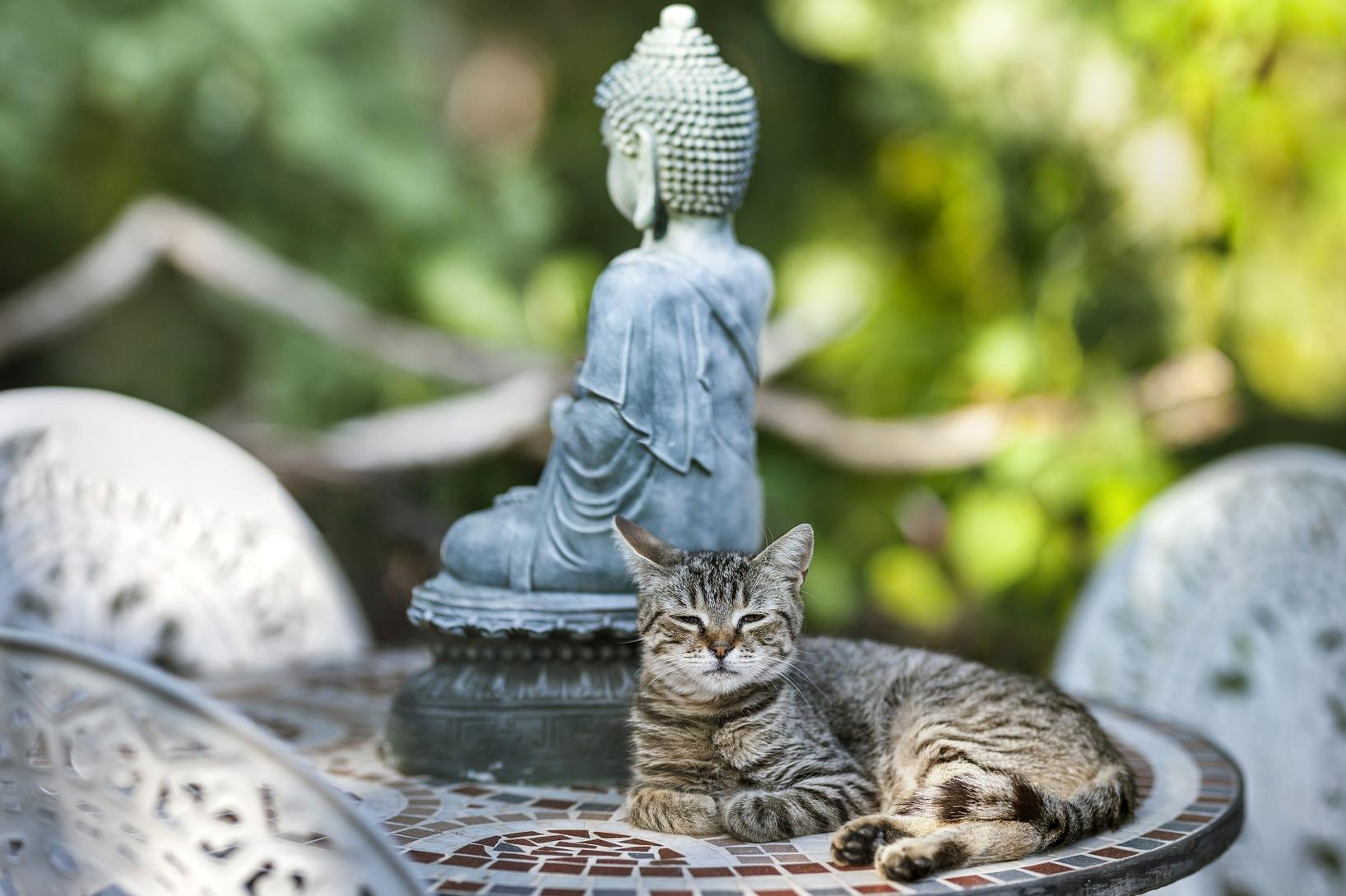 cat and buddha