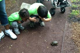 Children crouch and examine a turtle.