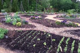Multiple garden beds planted with different vegetables.