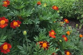 Bright red-orange flowers