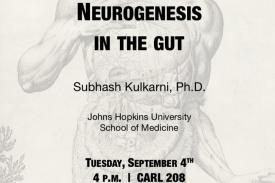 Where the gut meets the brain