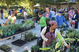shoppers at the Fall Plant Sale