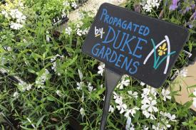 "A ""Propagated by Duke Gardens"" sign"