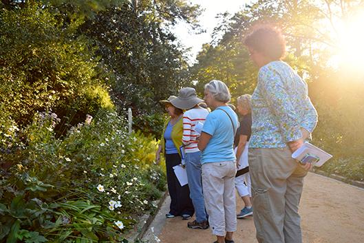 Plants are for every season!