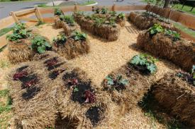 Straw bale gardening from Wikimedia Commons.