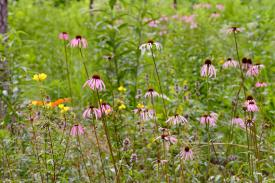 Discover the wildflowers of the Blomquist Garden