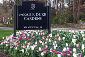 Flowers blooming in front of Duke Gardens.