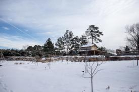 Discovery Gardens in winter