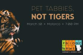 Pet Tabbies, Not Tigers