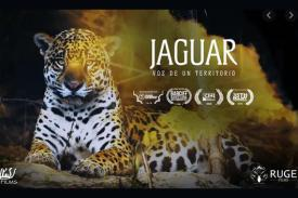 poster for Jaguar, Voice of a Territory, pic of jaguar