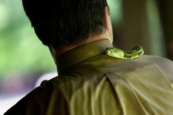 IMAGE: Pastor Randy ¿Mack¿ Wolford¿s yellow timber rattlesnake Sheba slithers around his neck during an outdoor worship service, Panther, West Virginia, May 2011. Photograph by Lauren Pond.