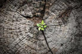 Image of new sapling growing out of tree stump