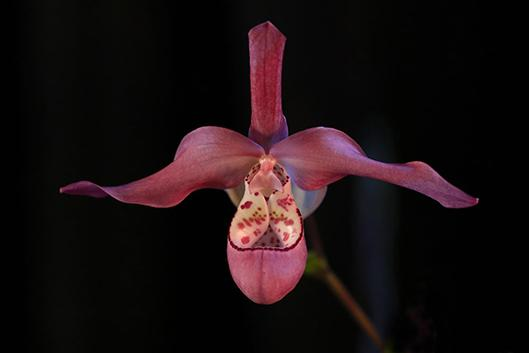 Learn to properly care for your orchids