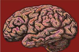Picture of brain with words