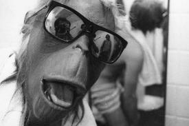 Monkey face mask in sunglasses, film still