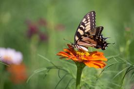 A butterfly rests atop a flower.