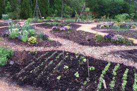 vegetable garden beds laid out