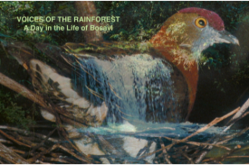 Voices of the Rainforest