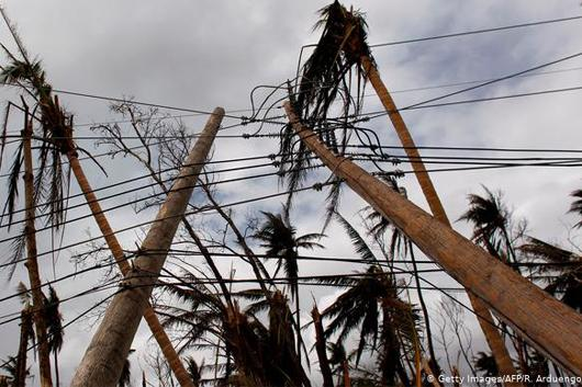 Photo of power poles tangled in palm trees