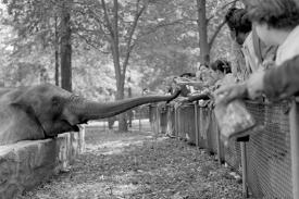 Children feed an elephant at the Bronx Zoo. Frank Larson, Courtesy of Queens Museum of Arts.