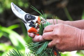 pruners and greenery