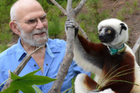 Dr. Oliver Sacks with a Coquerel's sifaka at the Duke Lemur Center