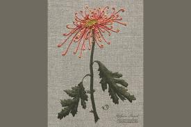 embroidered image of a mum flower, stem and leaves